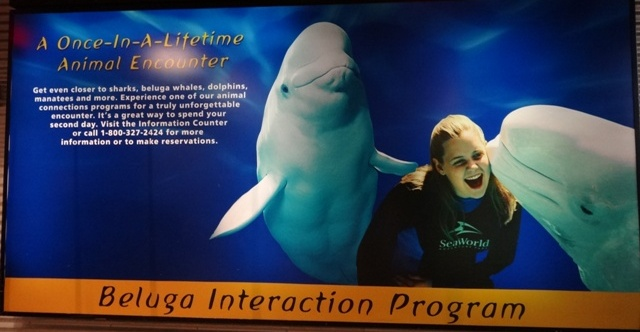 Orlando Sea World Beluga