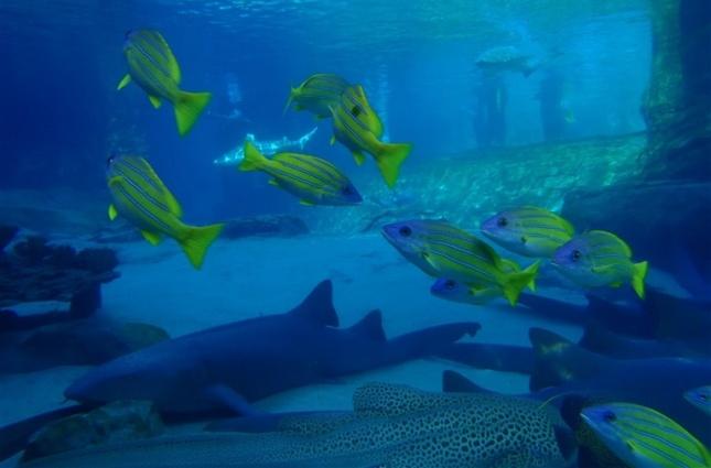 Discovery Cove Sea Venture