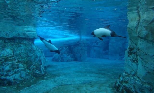 Aquatica - Dolphin Plunge - golfinhos 1