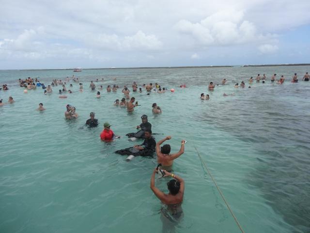 Maragogi mergulho nas piscinas naturais wazari for Piscinas naturales maragogi